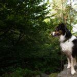 Lanie am Bärenfels