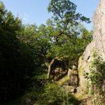 Alte Eiche am Bärenfels