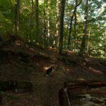 Umgestürzte Bäume und Stufen