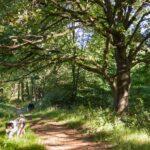 Alte Eichen entlang des Schluchtenpfades