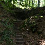 Stufen im Wald